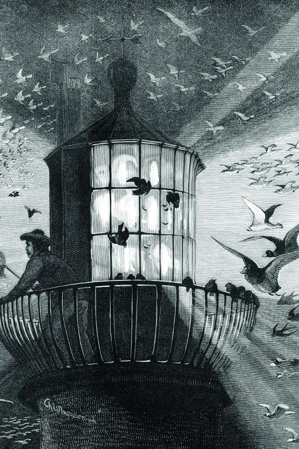 Lighthouse Birds Migration